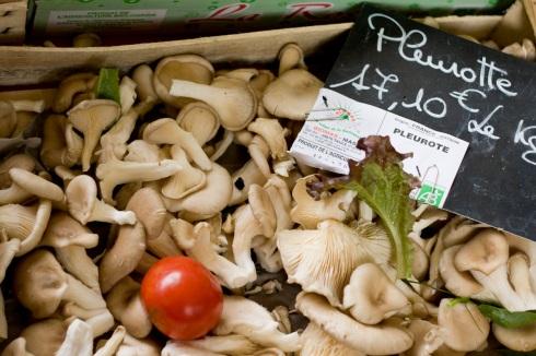 Pleurote Mushrooms