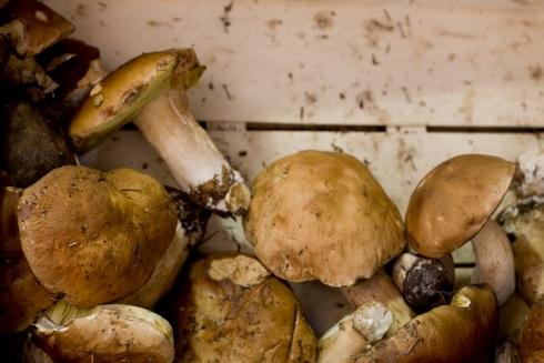 Baby Cèpe mushrooms