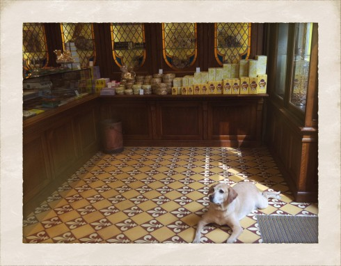 Paris dog in chocolate shop